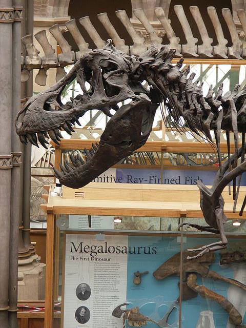 Photo of a dinosaur from Oxford's Natural History Museum